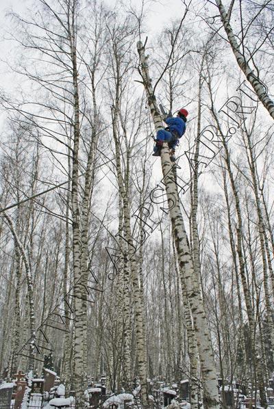 фото. удаление деревьев на кладбище