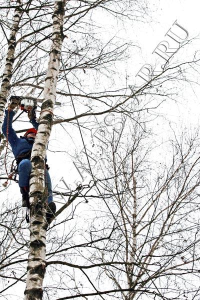 фото. удаление деревьев с завешиванием