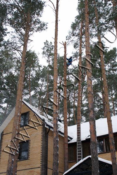 Фото. удаление дерева по частям