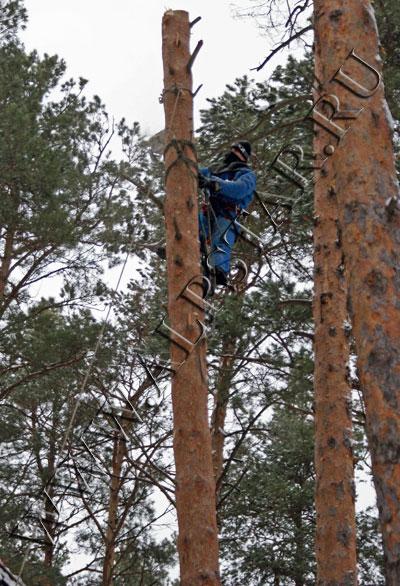 Фото. Спиливание деревьев по частям