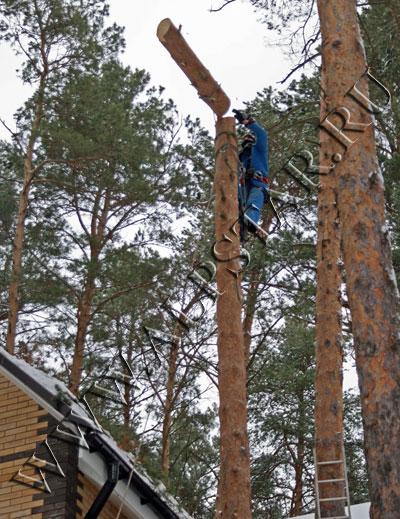 Фото. Удаление дерева методом промышленного альпинизма