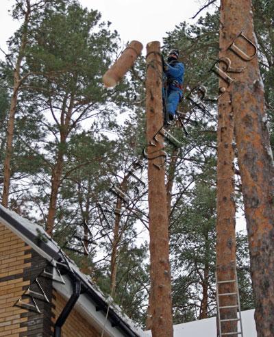 Фото. Удаление деревьев методом промальп
