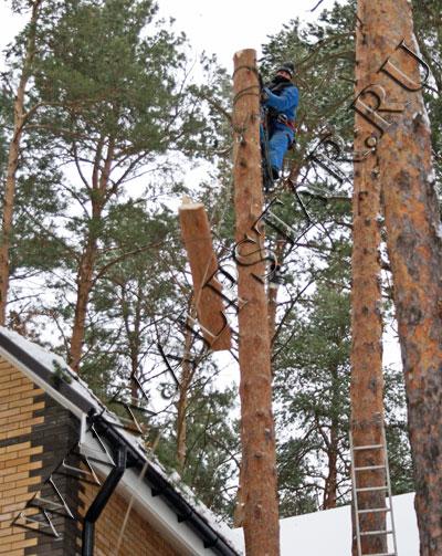 Фото. Спуск спиленной части дерева
